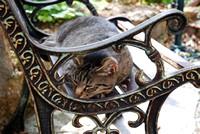 Vu de loin, le chat pourrait se confondre avec le banc