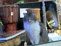 Un chat musicien :)