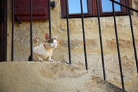 Un chat périgourdin