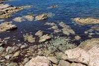 La mer est très limpide...