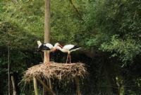 Parc ornithologique Les oiseaux du Marais Poitevin